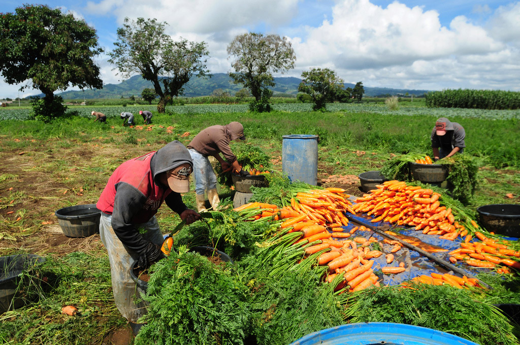 9_agricoltura_sociale